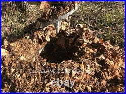 NEW 12 AUGER STUMP PLANER GRINDER BIT Skid Steer Loader Excavator 2 HEX